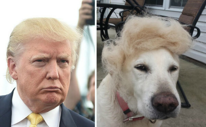 Donald Trump and dog