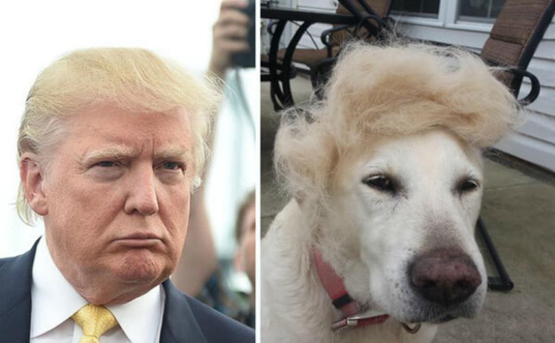 Donald Trump and dog